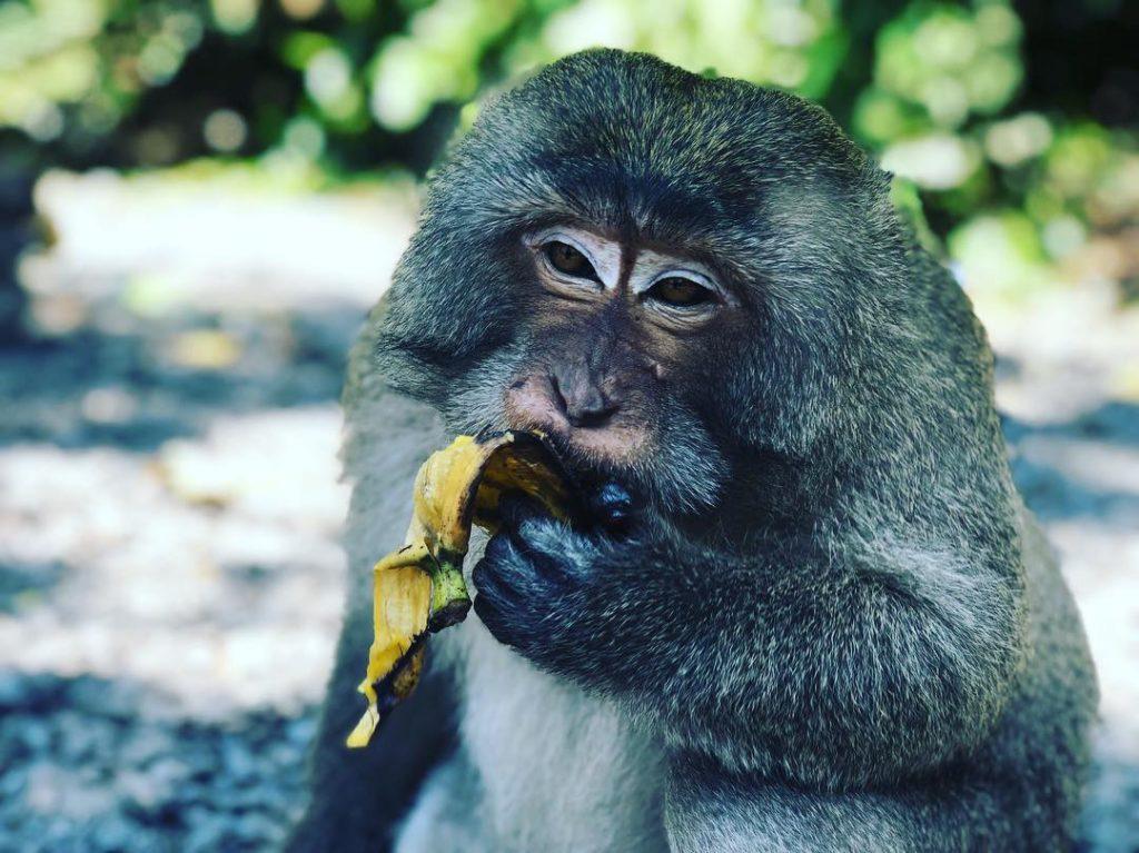 Местная обезьянка в Тайланде, февраль 2019 год